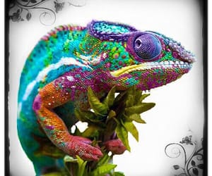 animal, plant, and rainbow image