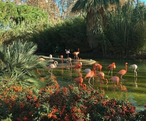 aesthetic, flamingo, and nature image