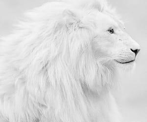 aesthetics, photography, and animal image