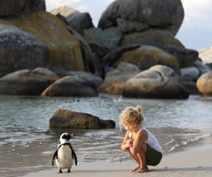 beach, child, and penguin image