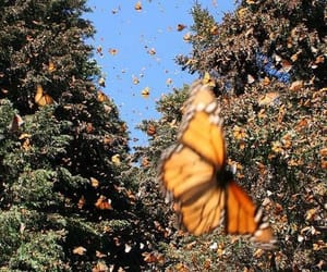 butterfly, nature, and tree image