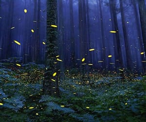 lucioles image