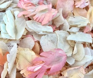 flowers, pastel, and petals image