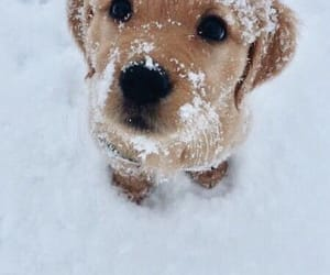 snow, animal, and dog image