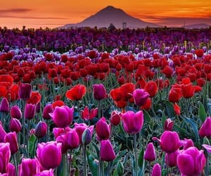 flowers, tulips, and sunset image