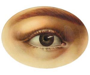 eye and vitbak image
