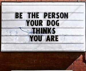 quotes, dog, and inspiration image