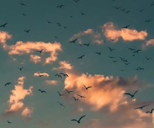 birds, sky, and clouds image