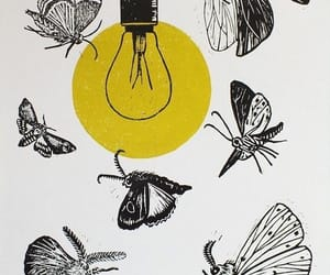 butterflies, butterfly, and drawing image