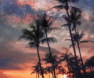beach, palms, and stars image