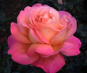 colores, primavera, and rosa image