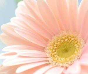 belleza, colores, and primavera image