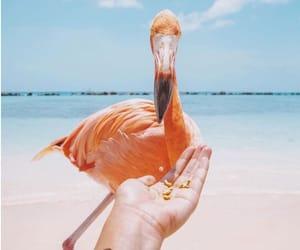 adorable, beach, and bird image