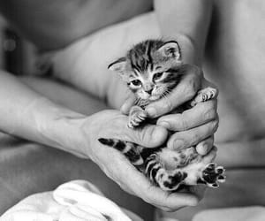 black and white, kitten, and cat image