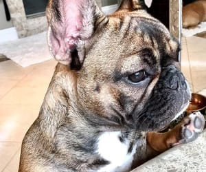 bully, dogs, and cute image