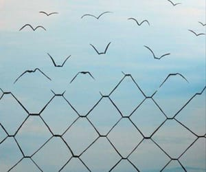 bird, chains, and fence image