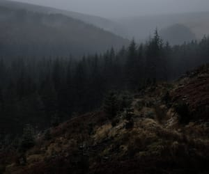 forest, mountains, and green image