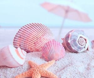 beach, shells, and pink image