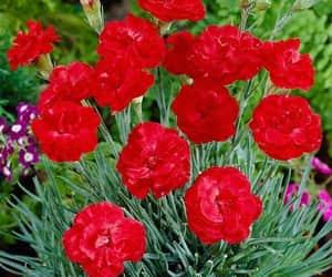 belleza, flores, and colores image