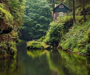 belleza, forest, and paisajes image