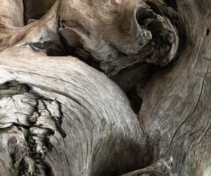 brown, color, and driftwood image