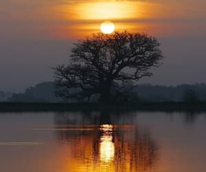 lake, tree, and reflection image