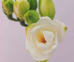 flower, white, and flowers image