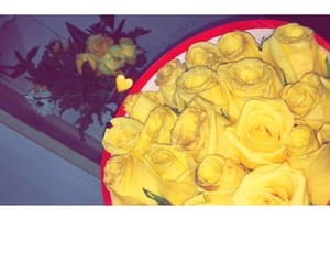flowers, Leo, and yellow image