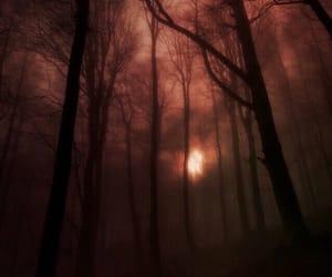 woods and dark woods image