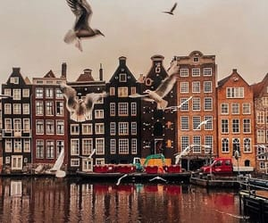 amsterdam, beautiful, and birds image