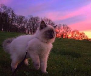 cat, cute, and sky image