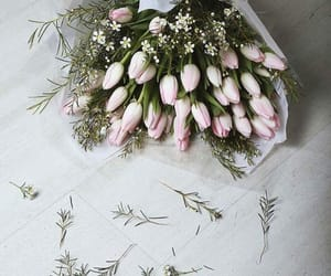tulip image
