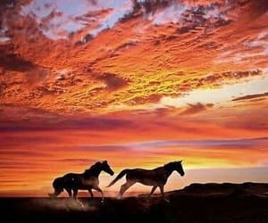horse, sunset, and nature image