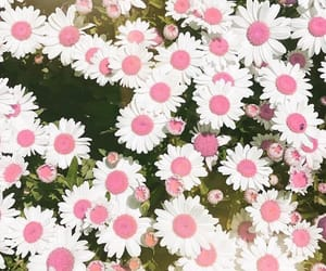 flowers, background, and pink image
