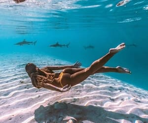 flesh, white sand, and sharks image