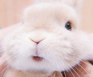 bunny, theme, and soft image