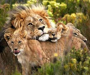 Animales, familia, and naturaleza image