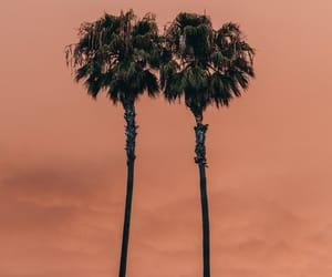orange, palms, and summer image