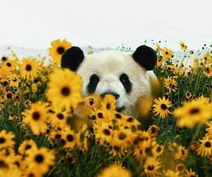 flowers, panda, and animals image