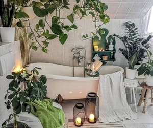 plants, apartment, and bath image