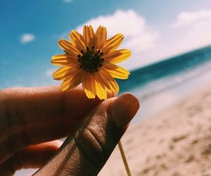 beach, flower, and hipster image