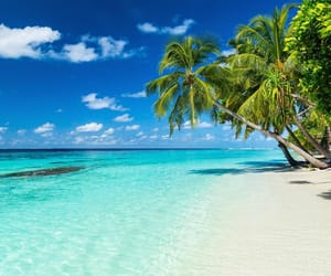 beach, beautiful, and exotic image