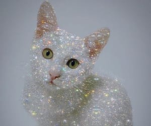 sparkle, cat, and like image