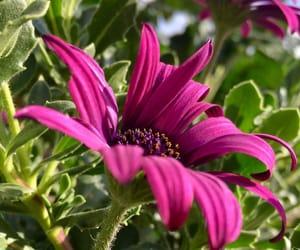blogger, botanic, and green image
