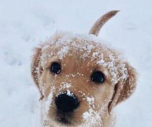 snow, animal, and dog image