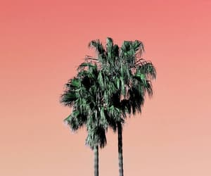 chill, Hot, and palm trees image