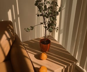 aesthetic, plants, and orange image