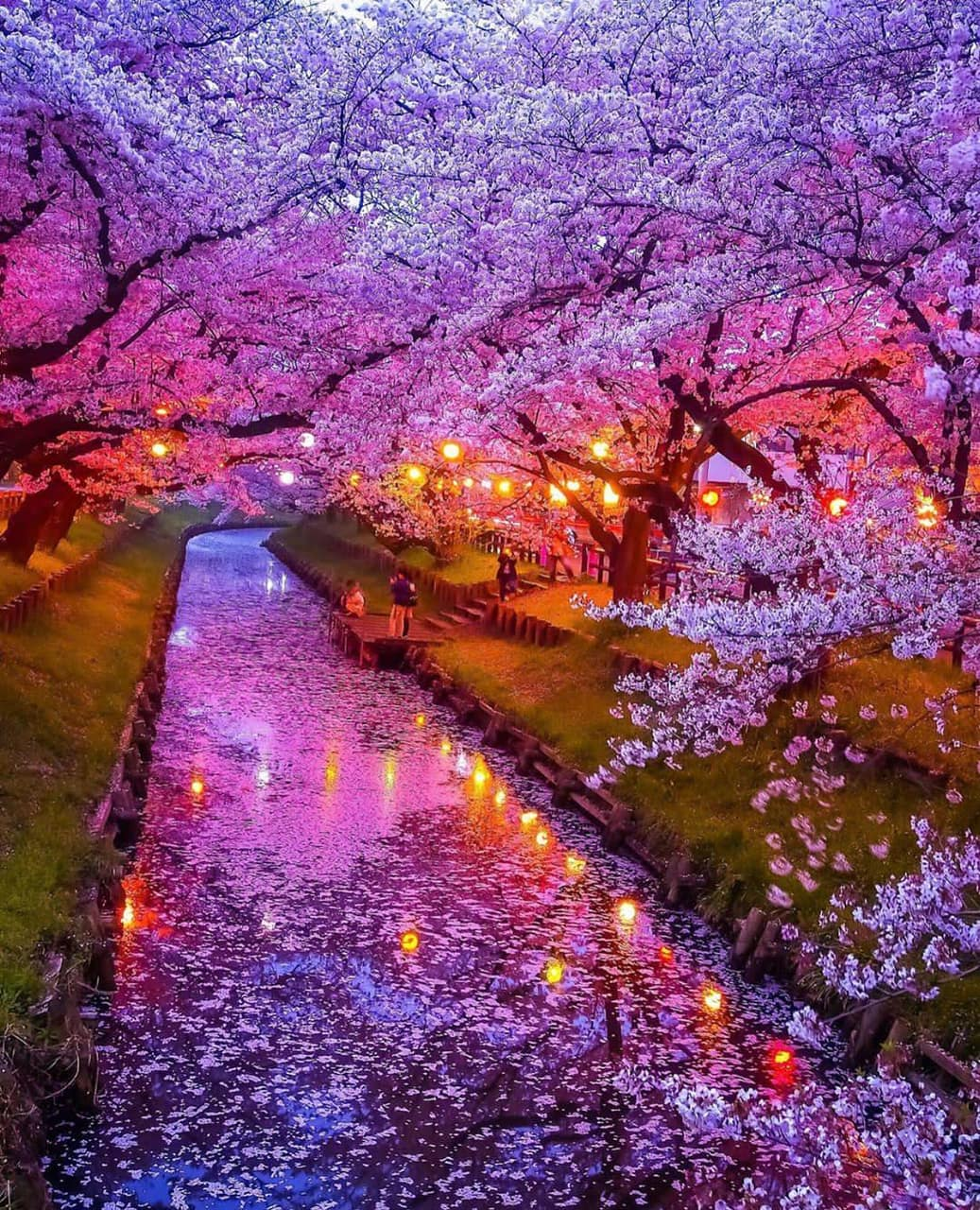 Image About Pink In Cherry Blossom Trees By Pusheen