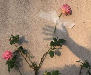 rose, alternative, and flowers image