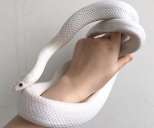 gurl, hands, and snake image